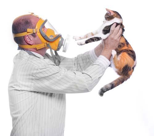 Katzenallergie – Katzenhaarallergie
